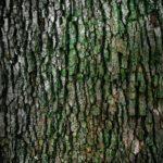 Ładny i {zadbany zieleniec to nie lada wyzwanie, szczególnie jak jego konserwacją zajmujemy się sami.